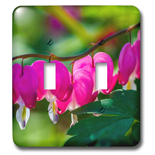 Heart Curved Pink (3dRose Alexis Photography - Flowers Bleeding Heart - Curved line of pink bleeding heart flowers. Green leaves - Light Switch Covers - double toggle switch (lsp_288816_2))