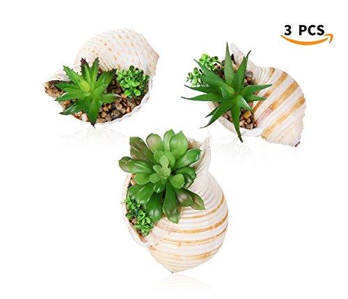 Decorative Artificial Succulent Plants Fake Succulent Cacti Bonsai in Conch Shell Planter Pots(set of 3) by SILUKER
