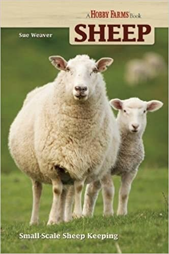 Sheep Farming: What You Need to Know