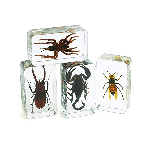 Excellerations ACBUGS Acrylic Scary Bug Specimens (Pack of 4)