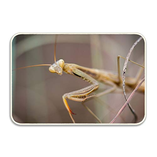 WYFG Animals Insect Praying Mantis Rug Non-Slip - Living, Dining, Room, Pet & Kitchen Rug 18