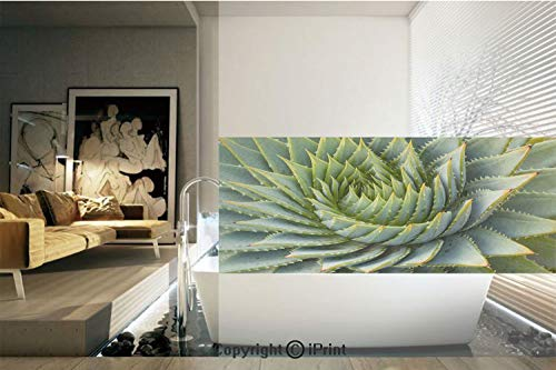 Ylljy00 Decorative Privacy Window Film/Botanic Spikey Wild Nature Inspired Western Dessert Plant Flower Artwork Image/No-Glue Self Static Cling for Home Bedroom Bathroom Kitchen Office Decor - Desserts Inspired Asian