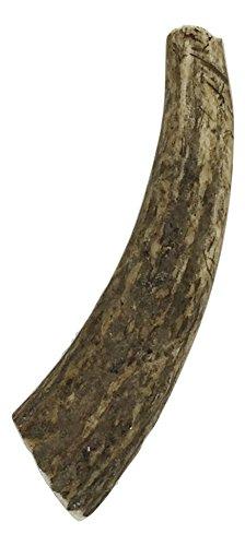 Antlers Premium Grade Antler Natural product image