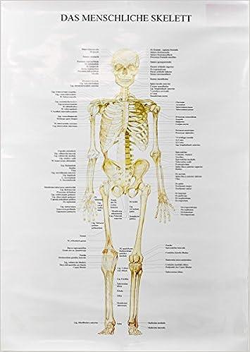 Das Skelett des Menschen - Vorderseite -: Amazon.de: S. Enxuto: Bücher