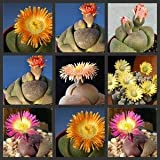 Pack of 50 Cactus Succulents Seeds, Pleiospilos Species Mix, Small (Comes with Free How to Live Stress Free Ebook)