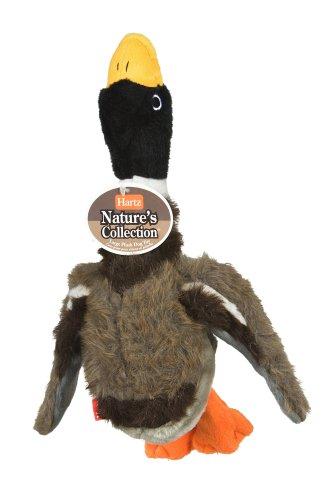 Hartz Nature's Collection Bird, Large, Birds Vary
