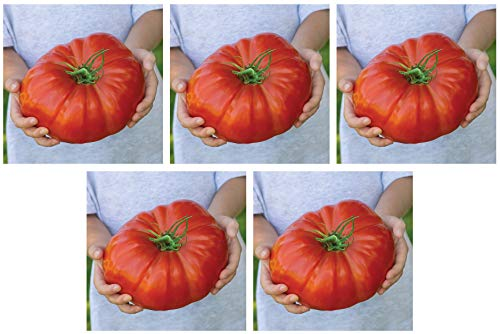 Burpee Exclusive 'Steakhouse' Hybrid | Large Red Beefsteak Slicing 1-3lbs Tomato | 25 Seeds (Fіvе Расk)