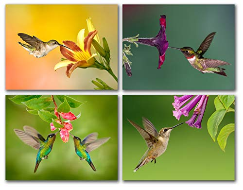 - Hummingbird and Flowers Greeting Cards - Summer Note Cards - Blank on the Inside - Includes 12 Cards and Envelopes - 4 Unique Designs - 5.5