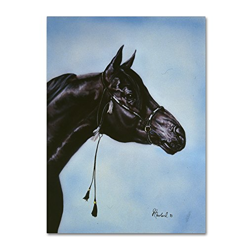 Trademark Fine Art Black Arabian by Jenny Newland, 14x19-Inch Canvas Wall Art by Trademark Fine Art