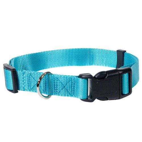 Nylon Collar Turquoise SM