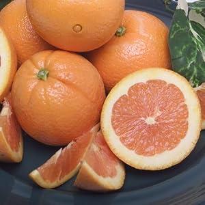 Melissa's Fresh Cara Cara Oranges (5 lbs.)