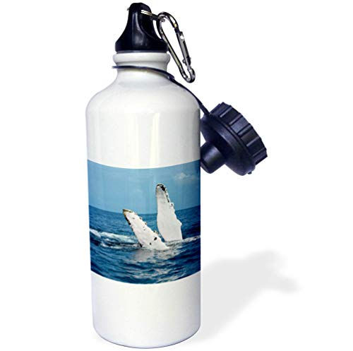3dRose Danita Delimont - Whales - A Humpback Whale Floats on its Back, Silver Bank, Dominican Republic - Flip Straw 21oz Water Bottle (wb_312990_2)