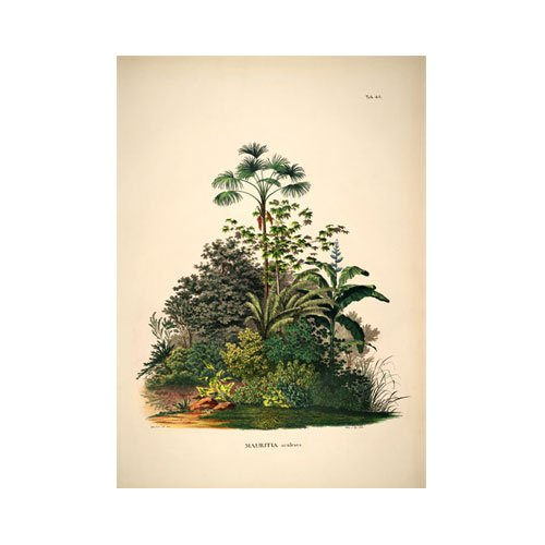 Botanical Palm Print ボタニカルパームプリント3504W50×H70cm B076HKD25V