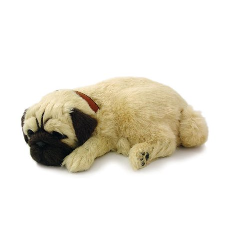 Wind & Weather Perfect Petzzz Pug Puppy