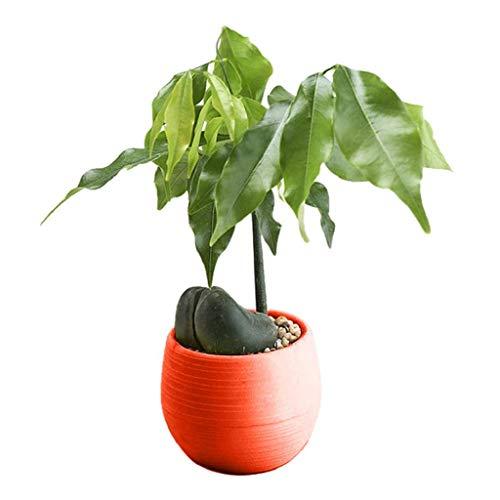 Bella Round Mirror - IslandseMini Colourful Round Plastic Plant Flower Pots Home Office Decor Planter (Red)