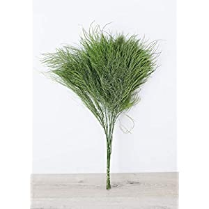 Afloral Preserved Tree Fern in Green - 10 Stems Per Bunch 91