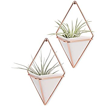 Amazon Candyqueen 1pcs Airplant Holder Geometric Wall Mount
