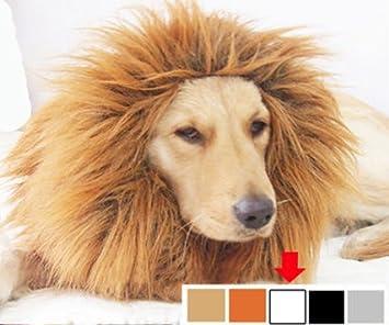 León blanco perro de melena peluca