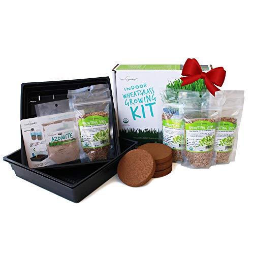 Organic Wheatgrass Growing Starter Kit - Grow & Juice Wheat Grass - Includes Non-GMO, Organic Wheatgrass Seeds - for Healthy Wheatgrass Shots, Home, Garden, and Cat Grass