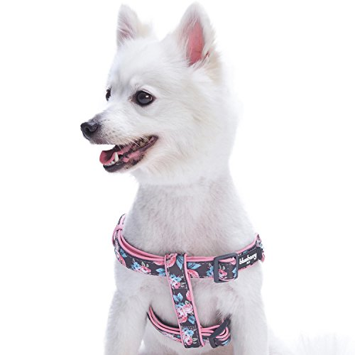 Blueberry Pet 2 Patterns Soft & Comfy Step-in Rose Flower Prints Girly Padded Dog Harness, Chest Girth 20 - 26, Medium, Adjustable Harnesses for Dogs