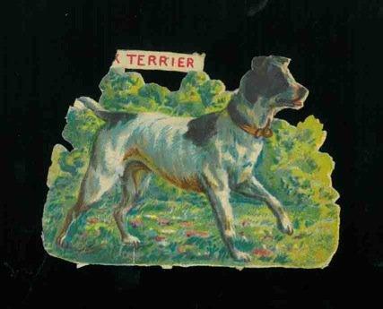 Cani : Fox terrier. (Cane Terrier)
