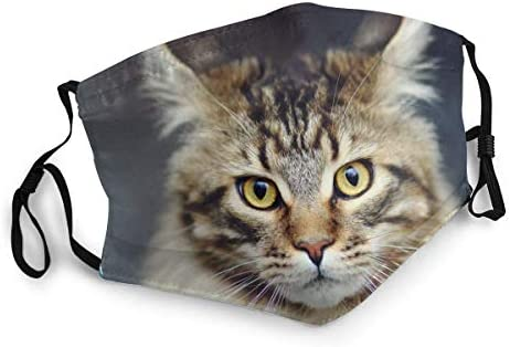Maskers Herbruikbare Masker Herbruikbare Maine Coon Kat Wasbare Mannen Vrouwen Doek Stof Gezicht Cover Bandanas