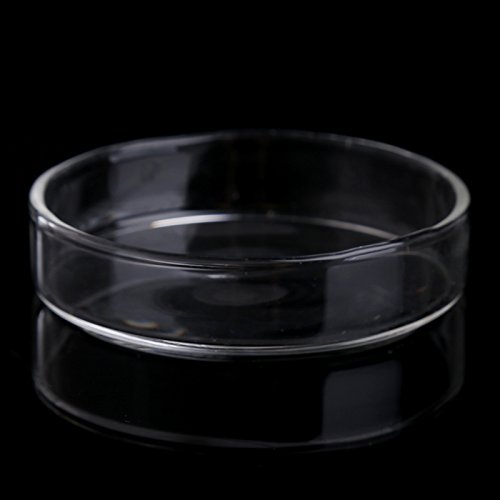 Misciu Aquarium Fish Tank Shrimp Feeding Food Dish Bowl Feeder Tray Container Glass Shrimp Feeding Dish for Shrimp Food