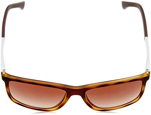 Emporio Sonnenbrille EA4058 Armani Rubber 559413 Havana rqE8gwra5x
