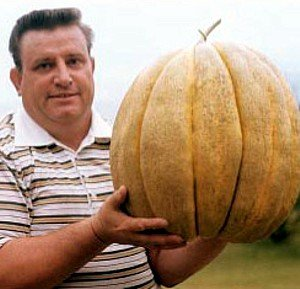 North Carolina Giant Cantaloupe - 10 Seeds - HUGE 70lbs