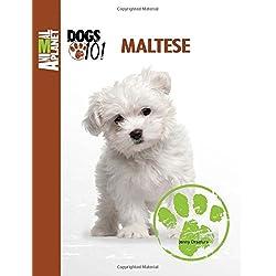 Maltese (Animal Planet): DOGS 101)