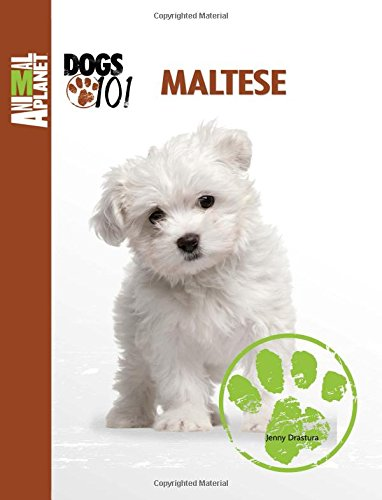 Maltese (Animal Planet: DOGS (Maltese Dog)