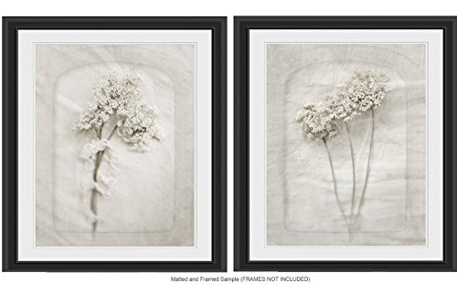 (Queen Anne's Lace Wall Art, 8