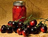 Hinterland Trading Indigo Rose Tomato Seeds 20 Organic Darkest Tomato Bred so Far, Exceptionally High in Anthocyanins