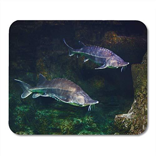 SYMSPAD Fish Green Atlantic Alive Sturgeon in Aquarium White Beluga Mouse Pad 8.6 X 7.1 in
