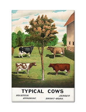 Típico vacas imán para nevera: Amazon.es: Hogar