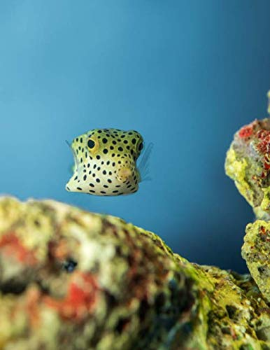 """Notebook: Underwater Puffer Fish Scuba Diving Snorkeling 8.5"""" x 11"""" 150 Ruled Pages"""