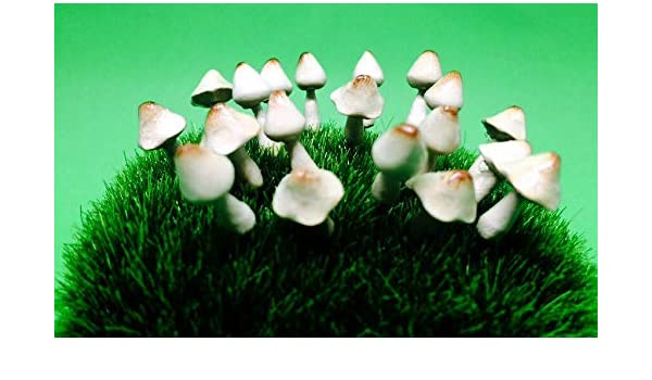 Green Set Of 3 Accessories Miniature Dollhouse FAIRY GARDEN Mushrooms