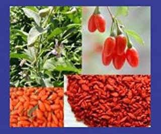 Earthcare Seeds Organic Tibetan Goji Berry 100 Seeds Lycium