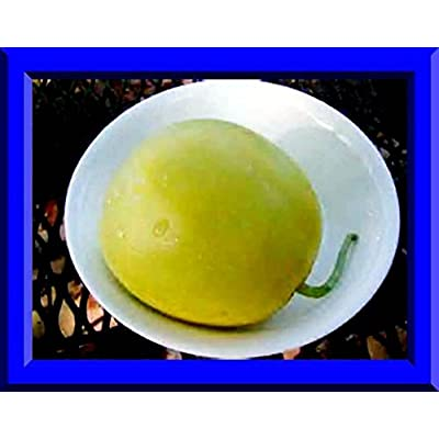 Sakata's Sweet Melon! 25 Seeds! COMBINED S/H! SEE MY STORE FOR RARE SEEDS! : Garden & Outdoor