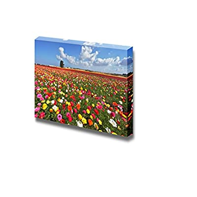 The Magnificent View Scenery of Garden Buttercups Colorful Flowers Under Blue Sunny Sky - Canvas Art Wall Art - 16