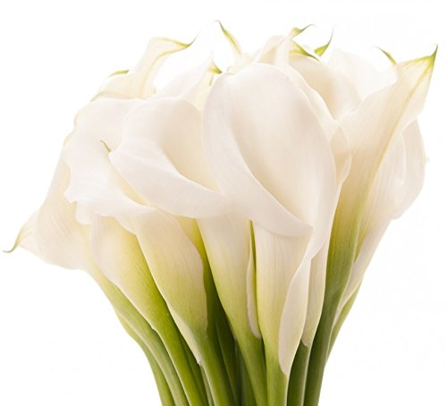 Fresh Cut White Calla Lily Flowers, 30 Stems,