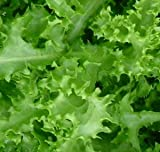 Green Curled Ruffec Endive 3000 Seeds-GARDEN FRESH PACK