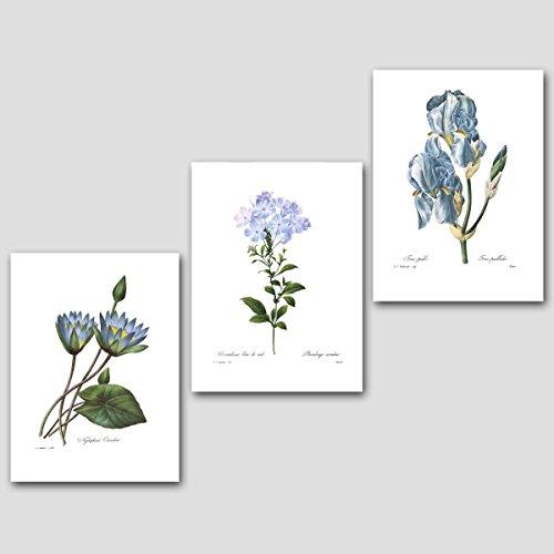 Set of 3 Botanical Prints, Blue Wall Art - Lithograph Iris Shopping Results