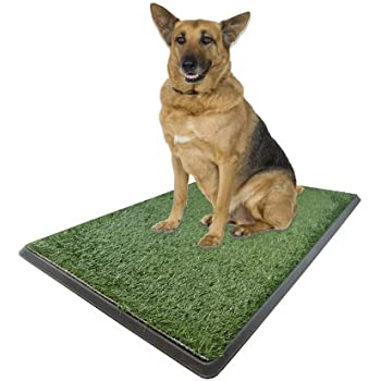 Amazon.com : X-large Potty Pad - Indoor Dog Bathroom 30\