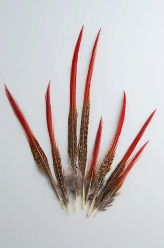10 GOLDEN PHEASANT RED TIP FEATHERS 5 to 7 INCHES FOR FLY TYING