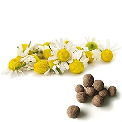 Chamomile Seed Balls (German Chamomile, Pack of 20)- Herb & Vegetable Seed Bombs to Make Gardening Fun and Simple!