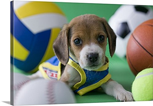 [Canvas On Demand Premium Thick-Wrap Canvas Wall Art Print entitled Beagle Puppy and Sports] (Animal Costumes Made From Recycled Materials)