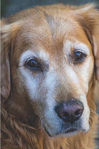 DOGS! A 2019 Weekly Planner: Featuring June (Best Laid Plans) (Best Laid Plans 2019)