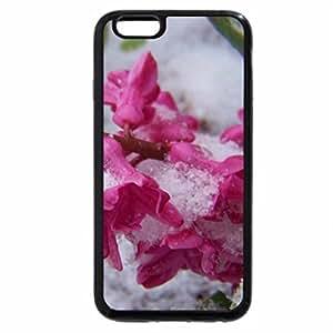iPhone 6S Plus Case, iPhone 6 Plus Case, Flowers In Snow