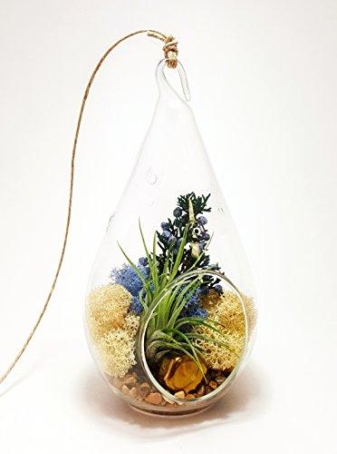 bliss-gardens-air-plant-terrarium-with-7-teardrop-glass-juniper-sprigs-gold-nugget-and-moss-juniper-